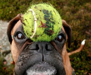 I have a ball on my head but it has nothing to do with the story. Neither do I. I'm just cute.