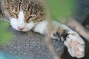 cat napping on rock