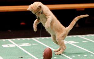 kitten-bowl-first