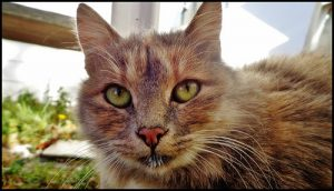 cat with milk face