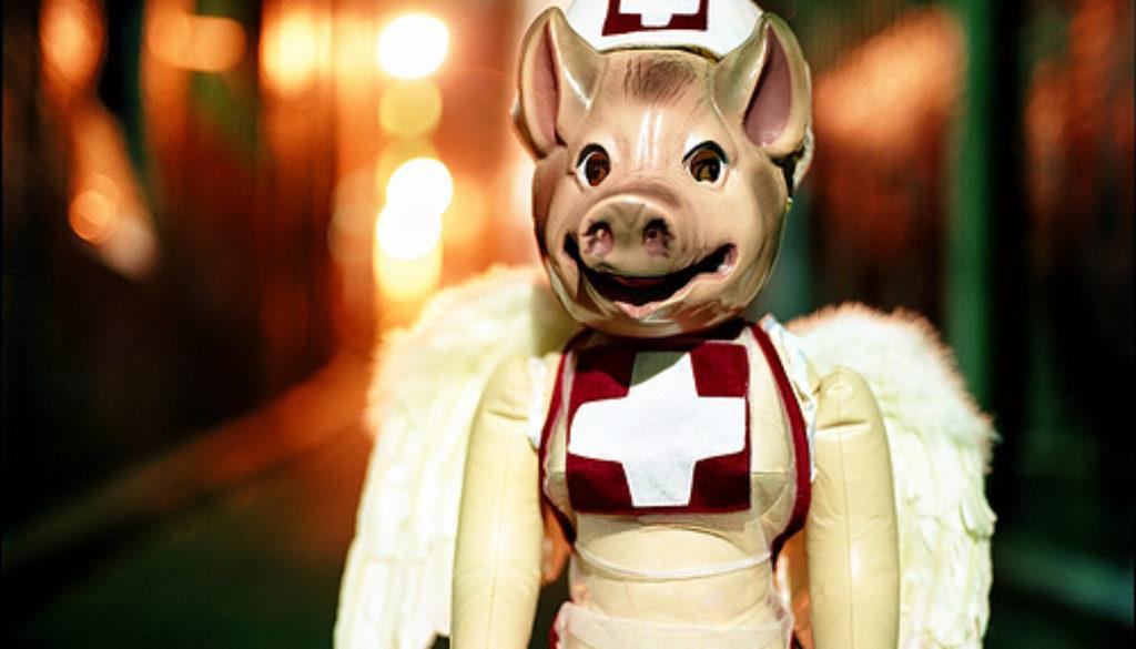 fairy pig in dress