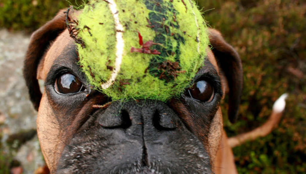 I have a ball on my head but it has nothing to do with the story. Neither do I. I