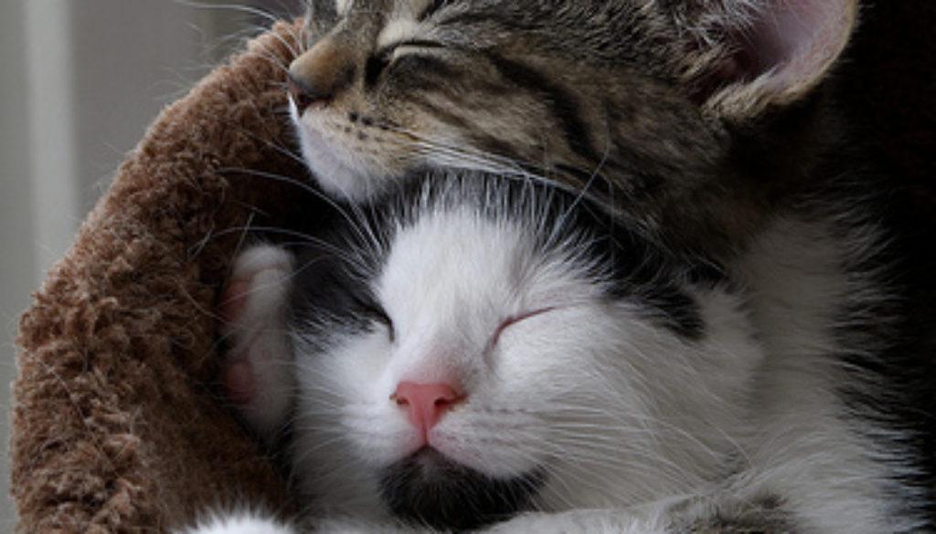cats cute nap