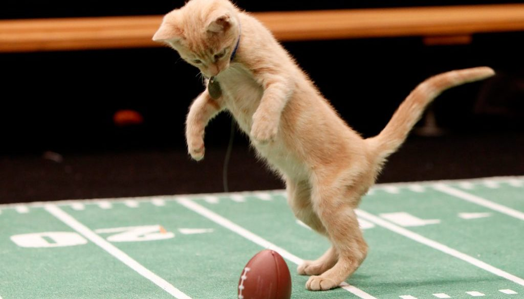 kitten-bowl-first