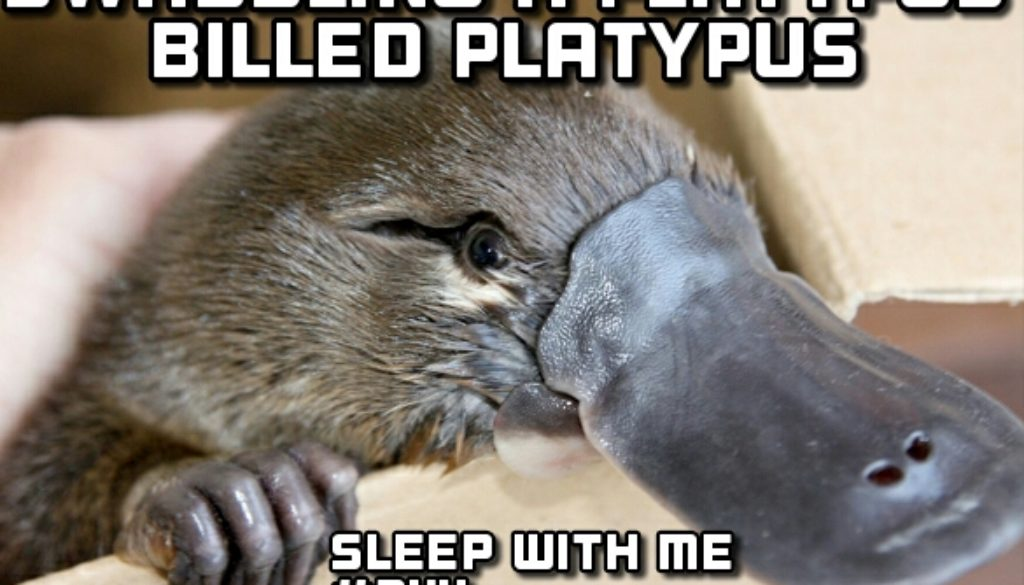 "Rejuvenating Sleep while ""Swaddling a Platypus Billed Platypus"" 